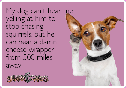 what dog hears