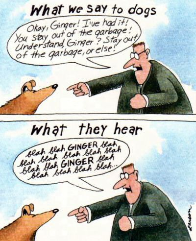 what a dog hears